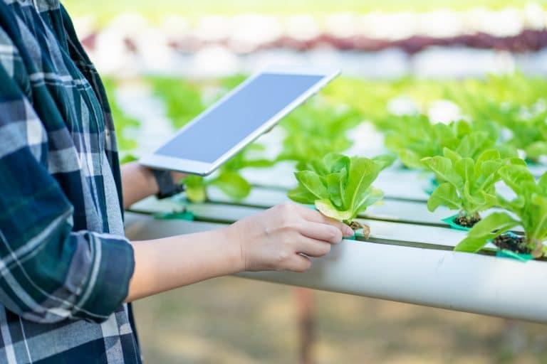 Un agricultor controla su negocio tras digitalizar su operación agrícola con AgtechApps.